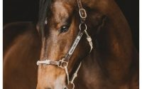 horse education company halter coupon code